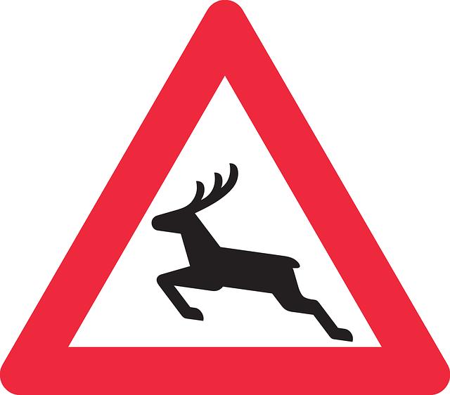 deer-crossing-car-accident